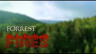 Forest Fires: A Stop Motion Animatioin
