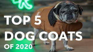 Top 5 Dog Coats | Rover.com