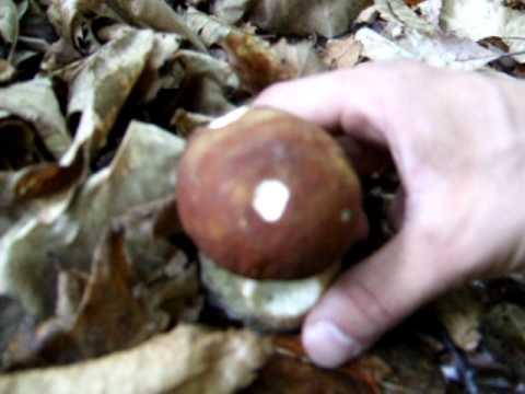 Da un fungo su unghie di gambe il prezzo