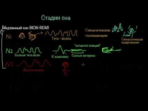 , title : 'Стадии сна и циркадианные ритмы | Здоровье | Медицина'