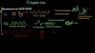 Стадии сна и циркадианные ритмы | Здоровье | Медицина