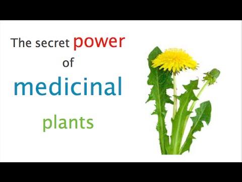 Video What is Herbal Medicine?
