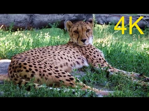 סיור יפהפה באיכות 4K בשנברון - גן החיות הוותיק ביותר בעולם
