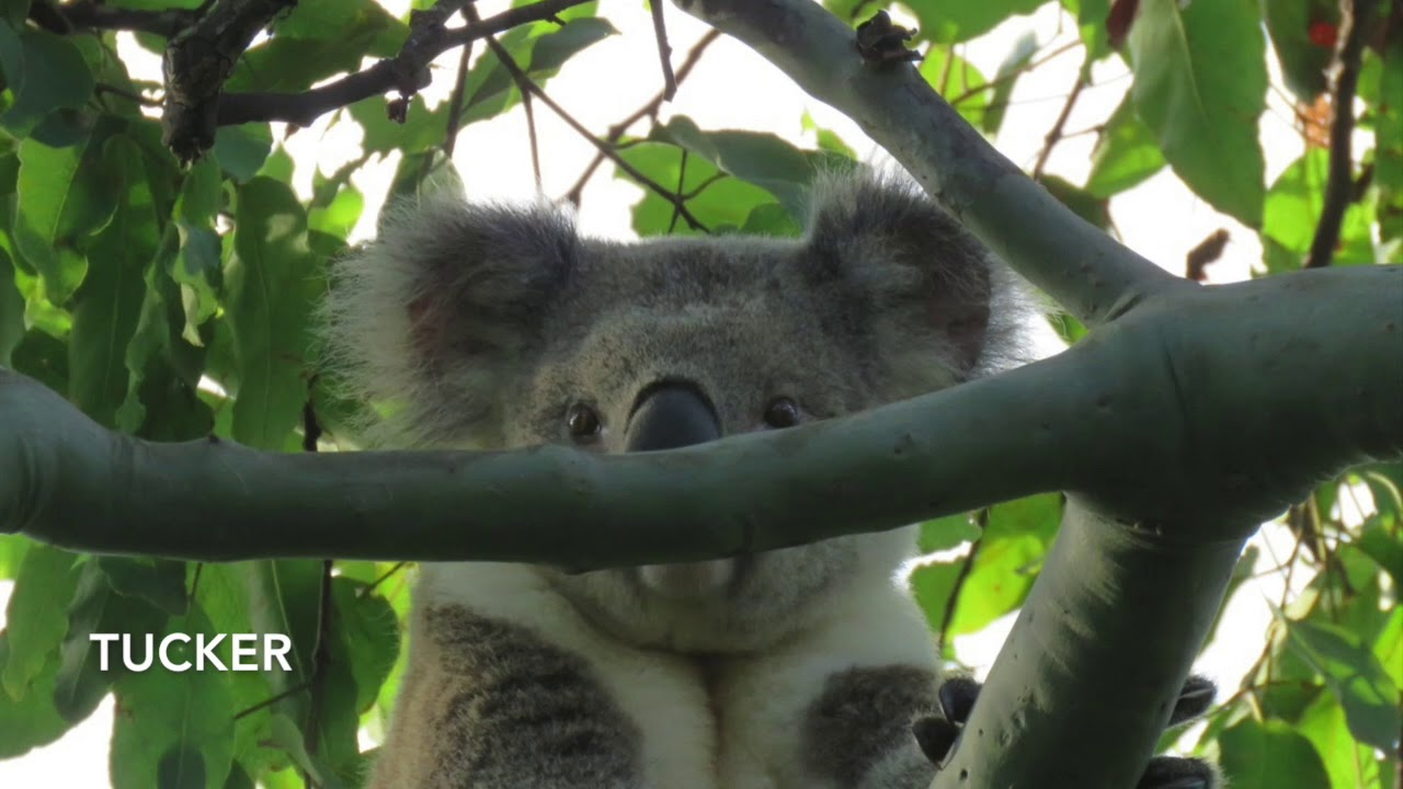 March 2019 Overview at Koala Gardens