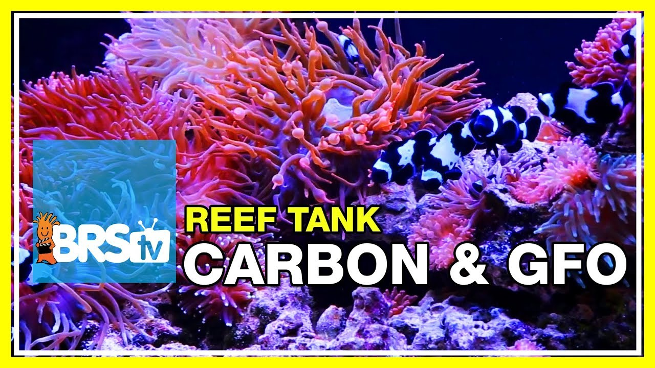Week 24: Carbon, GFO & filter media for a clean, stable reef tank | 52 Weeks of Reefing #BRS160