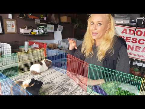 , title : 'Guinea Pig Boy Bonding with Saskia