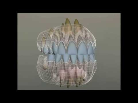 Как режутся зубы у ребенка. Порядок прорезывания зубов