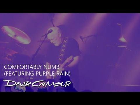 Comfortably Numb Live