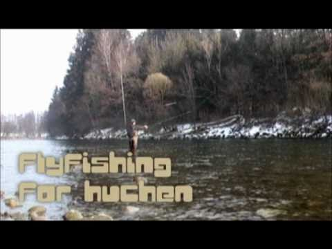Fly fishing for Hucho
