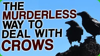 The Murderless Way To Deal With Crows (How Birds Will Take Over the World)