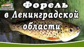 Самые рыбные места в ленинградской области