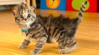 МОЙ Маленький КОТЕНОК / СИМУЛЯТОР котика как мультик /  Виртуальный питомец для детей #ПУРУМЧАТА