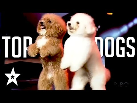 The Best Dog Auditions EVER On Got Talent From Around The World (видео)