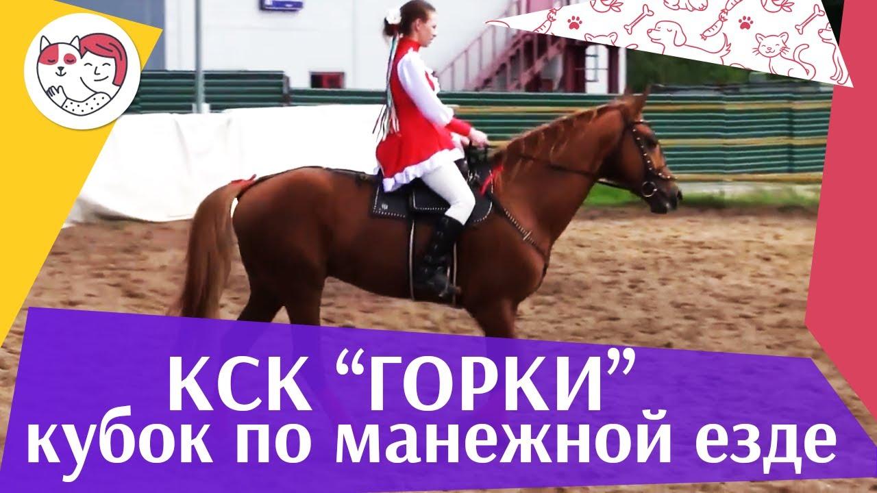 Летний кубок КСК Горки по манежной езде КЮР часть 40 на ilikepet