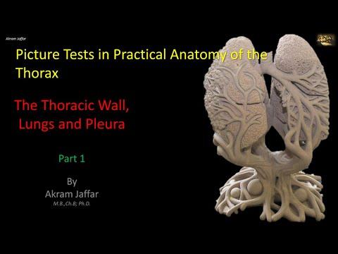 Test obrazkowy z anatomii klatki piersiowej - ściana klatki i płuca (część 1)