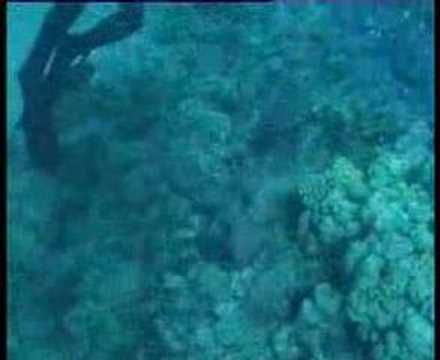 Koffer- oder Kugelfische, Rotes Meer allgemein,Ägypten