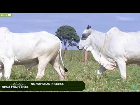 06 NOVILHAS PRENHES