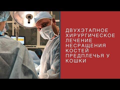 Двухэтапное хирургическое лечение несращение костей предплечья у кошки