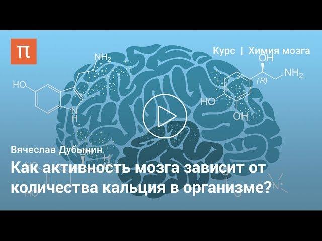 Мозок, робота синапсів - Вячеслав Дубінін