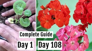 How to Plant, Grow & Care for Geranium Plants in Pots - The Complete Guide
