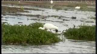 preview picture of video 'KAZINGA CHANNEL in the QUEEN ELIZABETH NATIONAL PARK, UGANDA.'