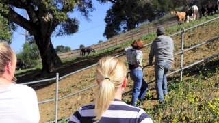 Former CSUN student teaches natural horsemanship lessons at ranch