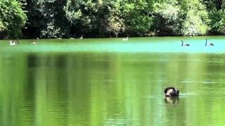 Bird Songs Relaxing - 2 Hours - Sound of Nature