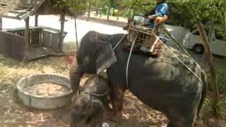 preview picture of video 'THE ELEPHANT VILLAGE - Damnoen Saduak, Ratchaburi, TH  (04-14-2010)'