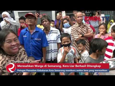 Meresahkan Warga di Semarang, Kera Liar Berhasil Ditangkap