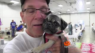 WATCH:  Crazy in love with Pugs