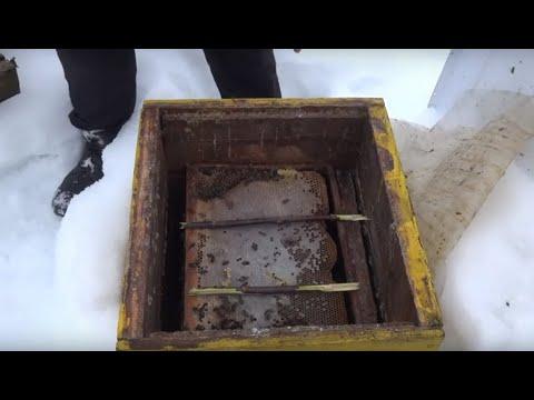 Пчеловодство. Экстренная зимняя подкормка. Парадокс:пчелы за неделю выбрали месячные запасы.