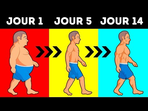 Perte de graisse pour les noobs