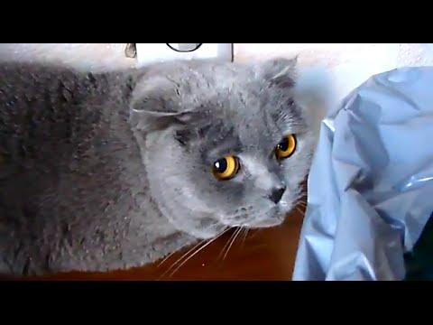 Come liberarsi da parassiti con Elena Malysheva di video
