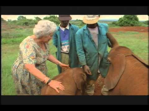 Vidéo de Daphné Sheldrick