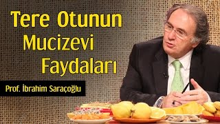 Tere Otunun Mucizevi Faydaları | Prof. İbrahim Saraçoğlu
