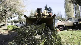 Ever Wonder What Involved with Tree Removal?  Watch This Video!