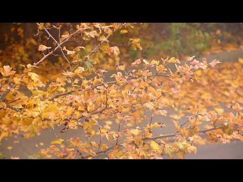 Что такое Осень ...