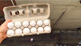 Whats going to Happen to a Carton of Eggs From 100ft? -WillitBREAK?