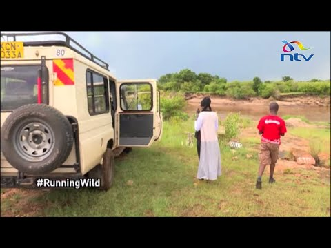Impact of COVID-19 on tourism in the Mara || #RunningWild