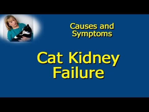 Video Cat Kidney Failure   Causes and Symptoms