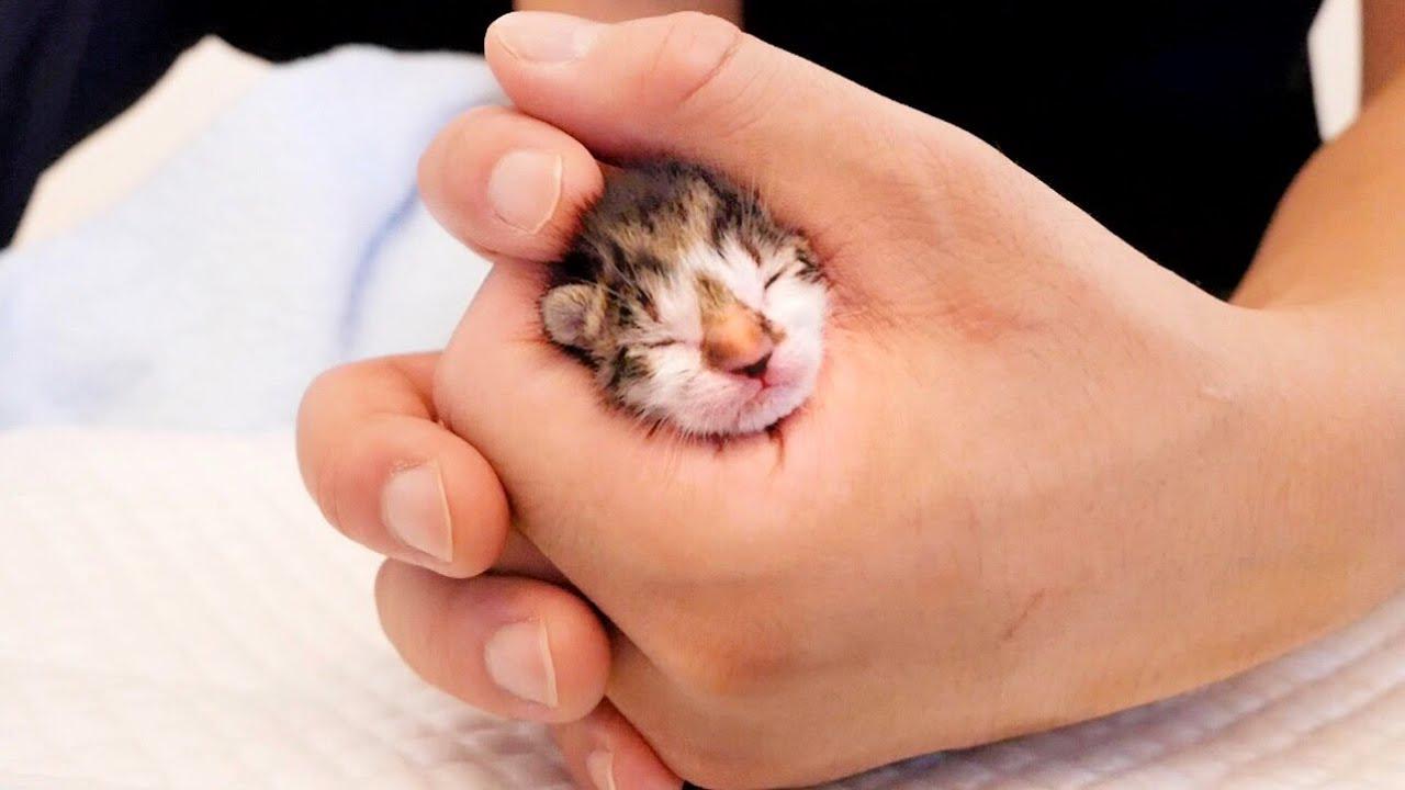 生後2日の赤ちゃん子猫がミルク準備中に驚きの行動に...【保護猫】