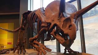 Dinosaurs and Digital Signage: The North Dakota Heritage Center and How Technology Enhances the Visitor Experience