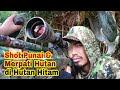 Berburu Pergam/Merpati Hutan & Punai di Hutan hujan tropis part 1