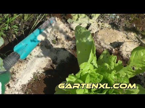 Schneckenabwehr bei trockenem Wetter / biologische Schneckenabwehr