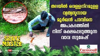 WOW! Vava Suresh rescues rare cobra with white patch on head | Snakemaster | Latest Episode