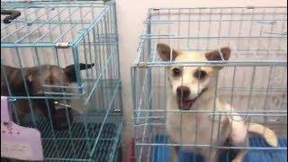 Российские волонтёры спасли от жестокой расправы больше тысячи собак и кошек в КНР
