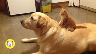 Funny Cat And Dog Pictures With Captions Compilation