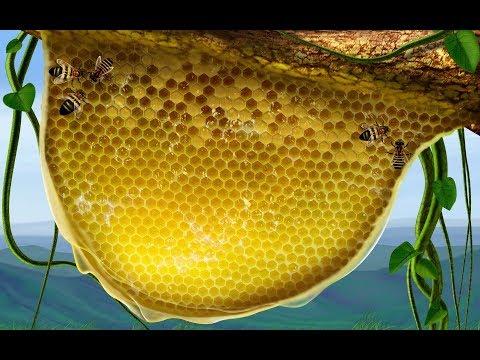 Что такое ЗАБРУС пчелиный? Интересные ФАКТЫ, лечебные свойства! Как применять забрус для здоровья