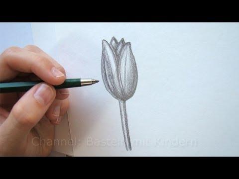 Zeichnen lernen: Blume zeichnen - Tulpe - Blüte