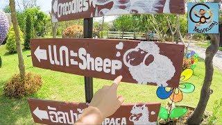 Зоопарк, миньоны, крокодилы, старая машина и футболка Minecraft. МанкиТайм в Таиланде